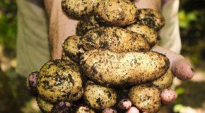 Jardinage au naturel : 10 gestes pour cultiver son potager sans pesticides